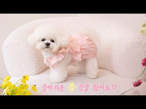 New photo shoot of dog clothing brand ㅣ Dog clothes dog model