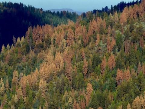 기후 영향은 산림 종자 생산에서 동서 분열을 주도합니다