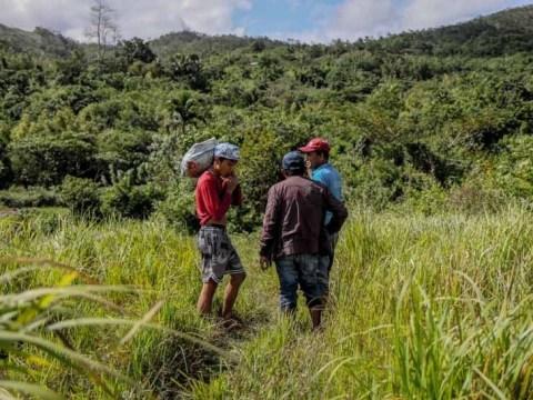 고지대 농부들이 함께 모여 칼리와 유역의 숲을 복원합니다.
