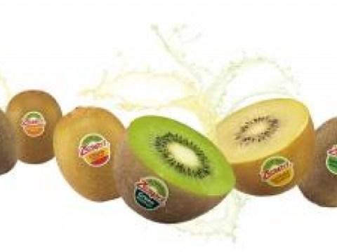 [Masalah Biz] Selandia Baru Kiwi Jesfrey, penjualan tahunan di seluruh dunia sebesar KRW 2 triliun … meningkatkan minat pada konsumen anak-anak dan penjualan domestik dua kali lipat selama 5 tahun