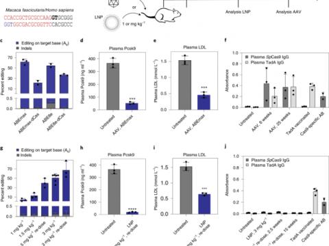 원숭이에서  생체 내 아데닌 염기 편집으로 LDL 콜레스테롤 수치 감소