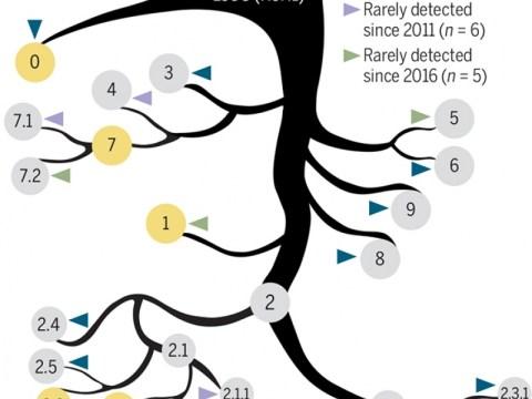 신흥 H5N8 조류 인플루엔자 바이러스