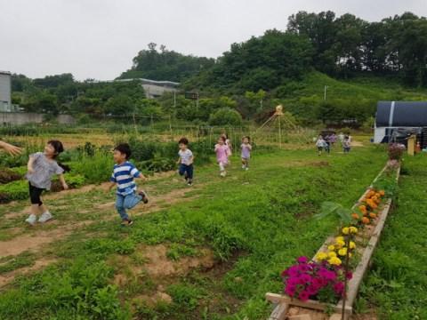 Provinsi Gyeonggi akan memberikan hasil panen gratis kepada kelompok rentan pangan