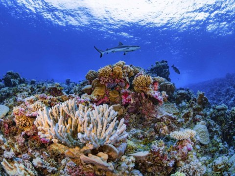 연구원들이 세계 산호에 대한 최초의 상세한 지도를 완성했습니다.