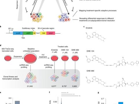 TraCe-seq를 사용한 암 약물 반응의 기초가 되는 전사 프로그램 식별