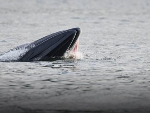 방황하는 고래의 삶과 유산